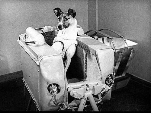 Собака и космос