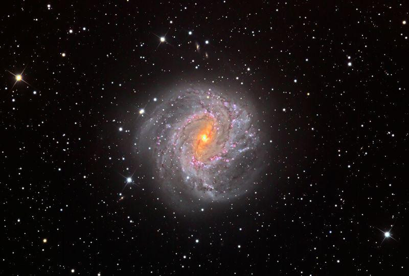 М83 от Cold Spring Observatory